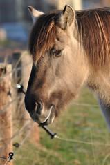 Auf der Weide (Uli He - Fotofee) Tags: ulrike ulrikehe uli ulihe ulrikehergert hergert nikon nikond90 fotofee morgenspaziergang oberstoppel unterstoppel stoppel windrad windräder pferd kuh weide fotograf