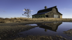 Disappearing Barn (Flint Roads) Tags: palouse usa wa washington abandoned barn blue bluesky cupola decay deteriorated forsaken old puddle reflection rural tree water yellow