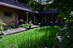 The spa in the grounds of Bliss, Bali (shankar s.) Tags: seasia indonesia java bali islandparadise baliisland touristdestination hotel lodgings accomodation resort entrance blissubudspaandbungalow ubudbali reception garland statue idol hindufaith hindureligion hinduism prayer shrine garden landscaping paddyfield ricepaddies ricefield building spa