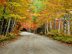 Driving the less travelled road (clickclique) Tags: road dirt dirtroad trees fall leaves color colour birch red green orange white ferns curves maple inexplore