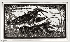 Two crayfish by Julie de Graag (1877-1924). Original from the Rijks Museum. Digitally enhanced by rawpixel (Free Public Domain Illustrations by rawpixel) Tags: animal antique art illustrated illustration illustrator juliedegraag old pdrijks artwork publicdomain black rijksmuseum sketch cc0 two crayfish vintage drawing woodcut handdrawn