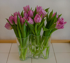 Tulips for the new year (2) (frankmh) Tags: plant flower tulip newyear vase aaltovase bouquet
