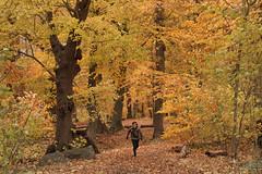 "Beekddal (""Daniel"") Tags: autumn sigma sd15 foveon veluwe herfst"