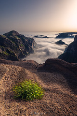 Sea of clouds (Ron Jansen - EyeSeeLight Photography) Tags: madeira clouds inversion sunset summer high peak hike vegetation lava cliff mountain lines rock portugal
