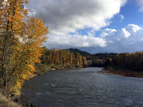 Fall Along the Willamette
