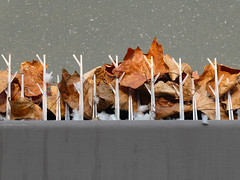 Gutter Leaves (lmurphy) Tags: mountainview potd