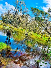 Peace (stonelaveaux) Tags: sky green blue water reflection orlando biking cyclist cycling florida lakeminneola baldcypress swamp