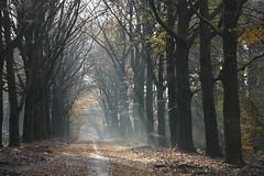 herfst licht_D711043 (Vogelmelk) Tags: veluwe bos herfst gelderland forest autumn nederland nature natuur