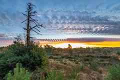 Sunrise Timespan (nicklucas2) Tags: time timelapse photoshop stack landscape tree
