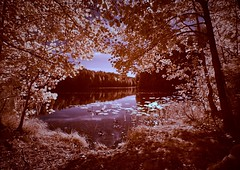 Infrared lake view (Digikuvaaja) Tags: europe stockphoto background bank beauty branch calm fantastic fantasy fantasylandscape filter forest infrared infraredphoto infraredphotography ir lake landscape leaf light nature outdoors panorama park red reflection relaxing river rural scenic season sky spirituallandscape summer summerbackground sunlight tranquil tree view water waterfront white