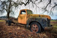 Chevrolet 4400 (Ian Sane) Tags: ian sane images chevrolet4400 farm field black walnut tree truck classic 1951 chevy 4400 corrosion rust woodburn oregon canon eos 5ds r camera ef1740mm f4l usm lens truckthursday