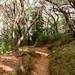 Way to Waipo'o Falls Jurassic Parc Kauai, Hawaii