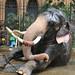 Perahera Elephant (1X7A4581b)