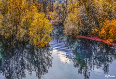 Autumn song (danilocolombo69) Tags: lago vagli danilocolombo danilocolombo69 nikonclubit
