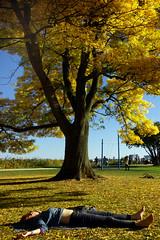 Relax under a big yellow tree (frankhurkuck) Tags: herbst autumn hamburg alster ausenalster alstercliff chillen relaxen tree bigtree yellowtree gelb yellow wiese rasen ausruhen entspannen sonne sun sonnenschein