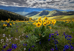 May 2019 (ebhenders) Tags: spring flowers mountains clouds arrow leaf balsamroot lupine larkspur national bison range montana