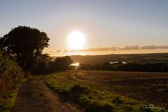 Helford Passage Sunset (DanRansley) Tags: britain cornwall danransleyphotography danransleynet england greatbritain helford helfordpassage kernow lizardpeninsula uk coast countryside dusk evening nature river sky sunset water
