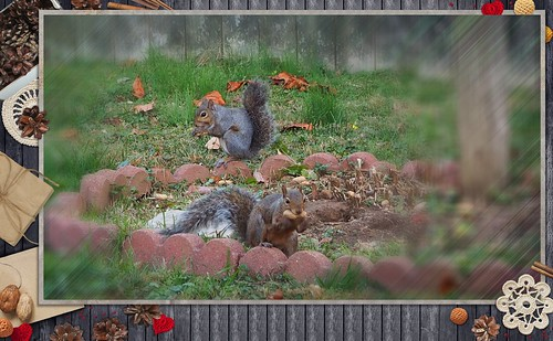 Squirrel Dinnertime with Fancy Frame