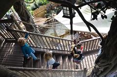 The Kids In La Cabane des Robinson (Joe Shlabotnik) Tags: disneyland disneylandparis violet everett stairs paris france april2018 eurodisney disney 2018 afsdxvrzoomnikkor18105mmf3556ged