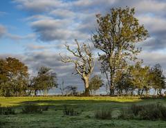 The naked tree (Through Bri`s Lens) Tags: sussex ashurst tree landscape farm field brianspicer canon5dmk3 canon1635f4 polariser