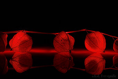 red light district 😄 [explored] (benno.dierauer) Tags: red rot tabletop macrounlimited macro makro physalis canon70d reflections mirror