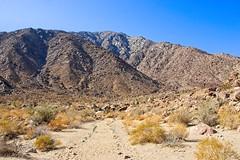 Palm Canyon walk (neil.dalphin) Tags: yellow borrego anza springs canyon palm walk desert park california usa america