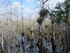 20170211 38 Everglades National Park (davidwilson1949) Tags: florida evergladesnationalpark