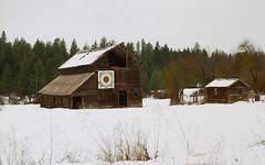 Sunflower barn in snow (sailronin) Tags: winter snow abandoned barn farm outbuilding weeds trees cold film analog rollei6008 120film kodakfilm ektar100 carlzeiss zeissplanar80mm rolleiflex
