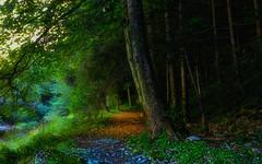 TASSONI MASSIMO (Tassoni Massimo) Tags: paesaggio paesaggi photo photoart piante paysage pianta plants prato photoshop landescape bosco boschi natura nature verde viale