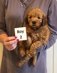 Darby Boy 2 pic 3 12-9