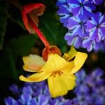 Toronto Ontario - Canada - Allan Gardens Conservatory - Toronto Tropical Garden -  Cluster of Beautiful Flowers thumbnail
