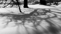 Winter shadows (superhic) Tags: silver shadow winter snow blackwhite zima sneg
