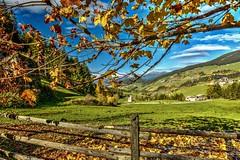Foglie d'Autunno (giannipiras555) Tags: autunno foliage foglie alberi natura paesaggio panorama trentino landscape montagna collina
