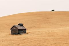 Gold Rush (Pedalhead'71) Tags: abandoned desert easternwashington landscape palouse prairie rural washington whitmancounty wheat colfax unitedstates us