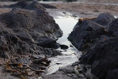Little Canyon (charlie.chowdhry) Tags: beach sea water rockpool seaside