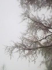 #nofilters #white #winter #snow #trees #sky (jaco.stardust1) Tags: sky nofilters snow trees white winter