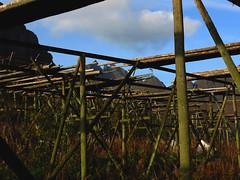 "Lofoten Islands Norway Moskenesoy Sorvagen headland  ""racks"" (k.marek.gncr) Tags: racks mountain sky grass nature natural fish dried gbcrphoto moskens lofoten norway norge"