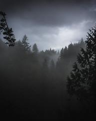 Capilano Suspension Bridge Park (tylerjacobs) Tags: sony nex5t moody mood fog foggy forest mountains landscape vancouver canada british columbia fall rainy rain pacific northwest