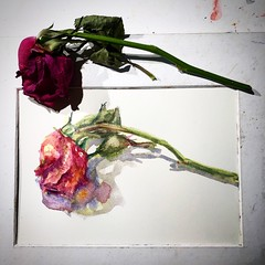 Day 1317. The #rose #painting for today. #watercolour #watercolourakolamble #sketching #stilllife #flower #art #fabrianoartistico #hotpress #paper #dailyproject (akolamble) Tags: rose painting watercolour watercolourakolamble sketching stilllife flower art fabrianoartistico hotpress paper dailyproject