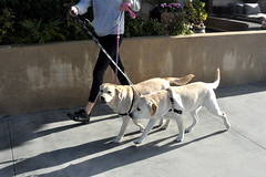 dogs (greenelent) Tags: dog animal pet manhattanbeach ca california