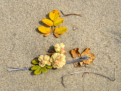 Natural art arrangement (maytag97) Tags: maytag97 nikon d750 outdoor outside sand beach plant leaf yellow color green stick twig flower white flowers background summer beautiful nature decoration fresh natural floral beauty
