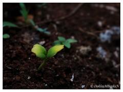In beginning (Doklas M Boyke) Tags: macro inexplore