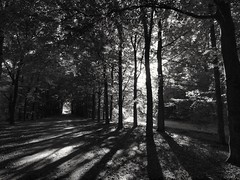 Twente, the Netherlands (bobbykwibus) Tags: forest bos woud tree boom blackandwhite natuur nature sun zon twente holland thenetherlands shadow schaduw