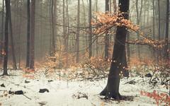 A Touch of Winter (Netsrak) Tags: baum eu eifel europa europe forst himmel landschaft natur nebel pfad rheinland rhineland wald weg fog forest landscape mist nature path tree trees winter woods bäume rheinbach germany