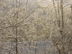 First Snow_9495 (smack53) Tags: smack53 winterscenery wintry snow snowfall snowscape snowstorm snowy autumn autumnseason fall fallseason westmilford newjersey canon powershot sx530hs canonpowershotsx530hs