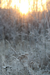 Sunrise (Attolrahc) Tags: canoneos80d sigma100400mmf563dgoshsm sigma sunrise morning cold nature naturephotography