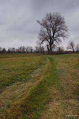 DSC01778 (Csaba Vásárhelyi) Tags: nature hungary sződ tree trees természet sky égbolt növény sony rx100mk2 rx100ii