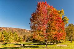 Beginning to Blaze (Back Road Photography (Kevin W. Jerrell)) Tags: fall autumn autumncolors autumnbeauty backroadphotography nikond7200 wildernessroadstatepark ewingva leecountyvirginia