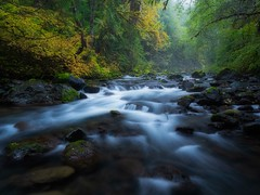Remembering fall (Matthew James Lewis) Tags: washingtonstate water washington fall forest firtrees cedertrees vinemaple veiwstotakeyourbreathaway longexposure light leaves landscape beauty bigquilvalley bigquilceneriver rocks olympicpeninsula olympicnationalforest