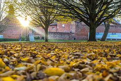 My beautiful sunshine 💛💛 (Photo_stream_this) Tags: rufford park leaves sunshine nottinghamshire trees ha